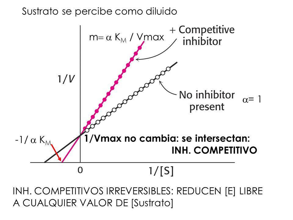 Sustrato se percibe como diluido 1/Vmax no cambia: se intersectan: INH. COMPETITIVO m K M / Vmax = 1 INH. COMPETITIVOS IRREVERSIBLES: REDUCEN [E] LIBR