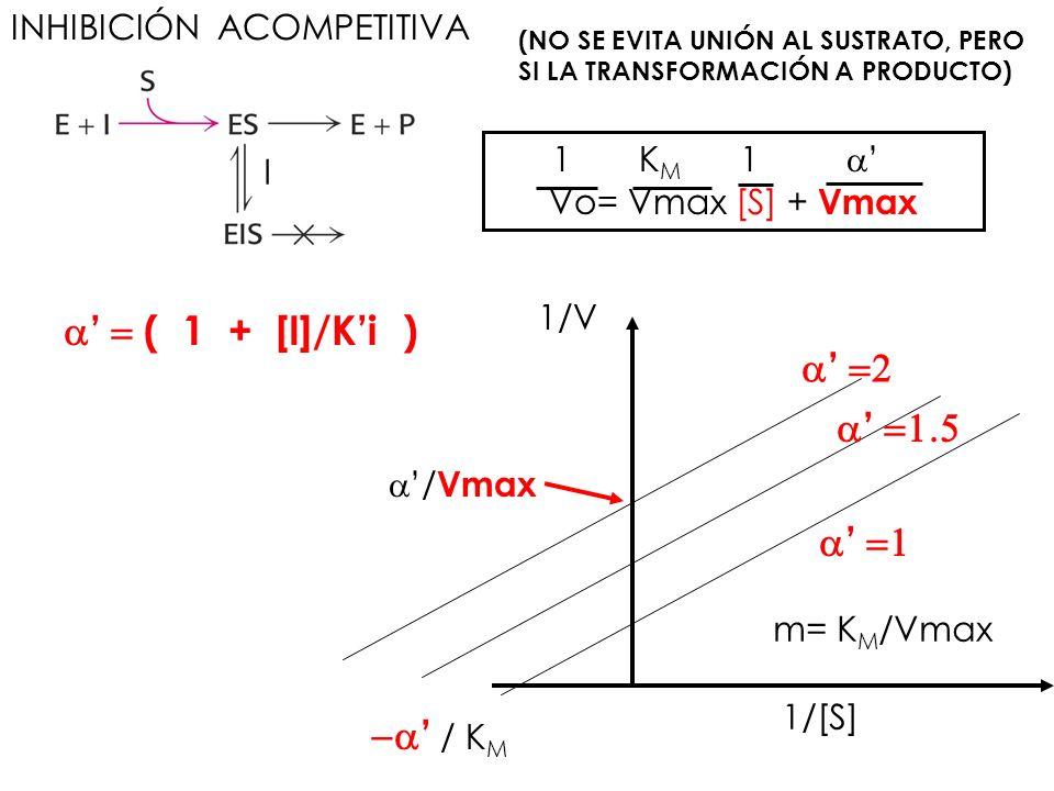 INHIBICIÓN ACOMPETITIVA I (NO SE EVITA UNIÓN AL SUSTRATO, PERO SI LA TRANSFORMACIÓN A PRODUCTO) ( 1 + [I]/Ki ) 1 K M 1 Vo= Vmax [S] + Vmax / Vmax / K