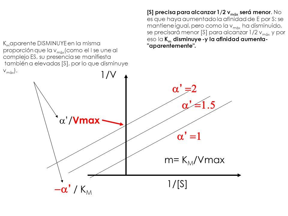/ Vmax / K M 1/[S] 1/V m= K M /Vmax K m aparente DISMINUYE en la misma proporción que la v máx (como el I se une al complejo ES, su presencia se manif