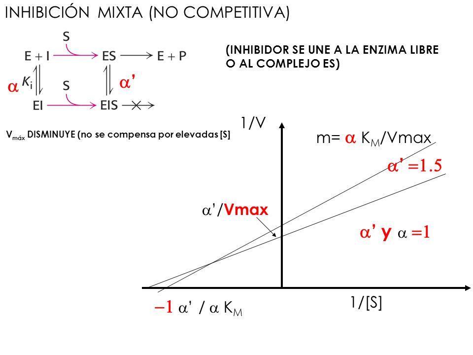 INHIBICIÓN MIXTA (NO COMPETITIVA) (INHIBIDOR SE UNE A LA ENZIMA LIBRE O AL COMPLEJO ES) / Vmax / K M y 1/[S] 1/V m= K M /Vmax V máx DISMINUYE (no se c