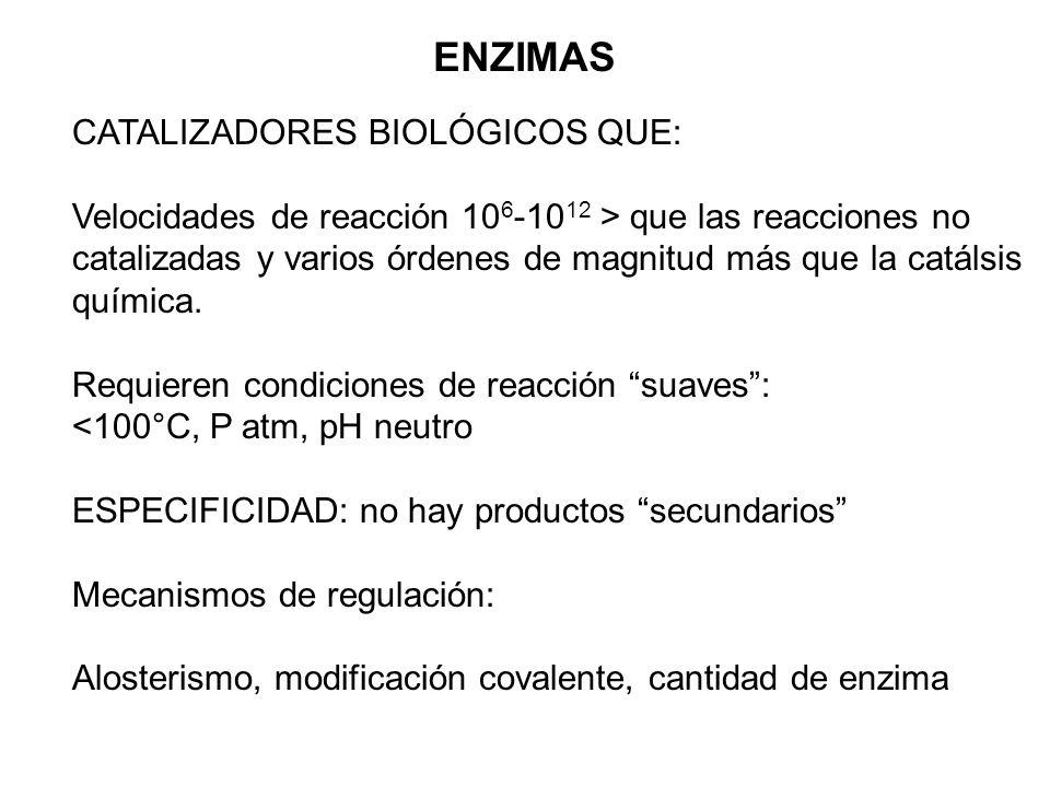 ENZIMAS CATALIZADORES BIOLÓGICOS QUE: Velocidades de reacción 10 6 -10 12 > que las reacciones no catalizadas y varios órdenes de magnitud más que la