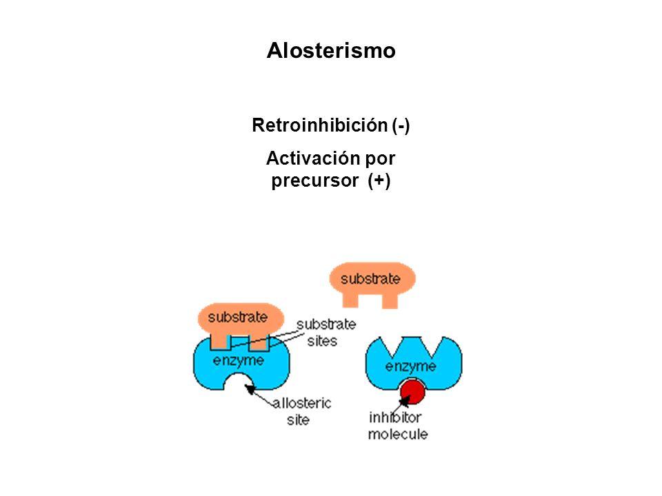 Alosterismo Retroinhibición (-) Activación por precursor (+)