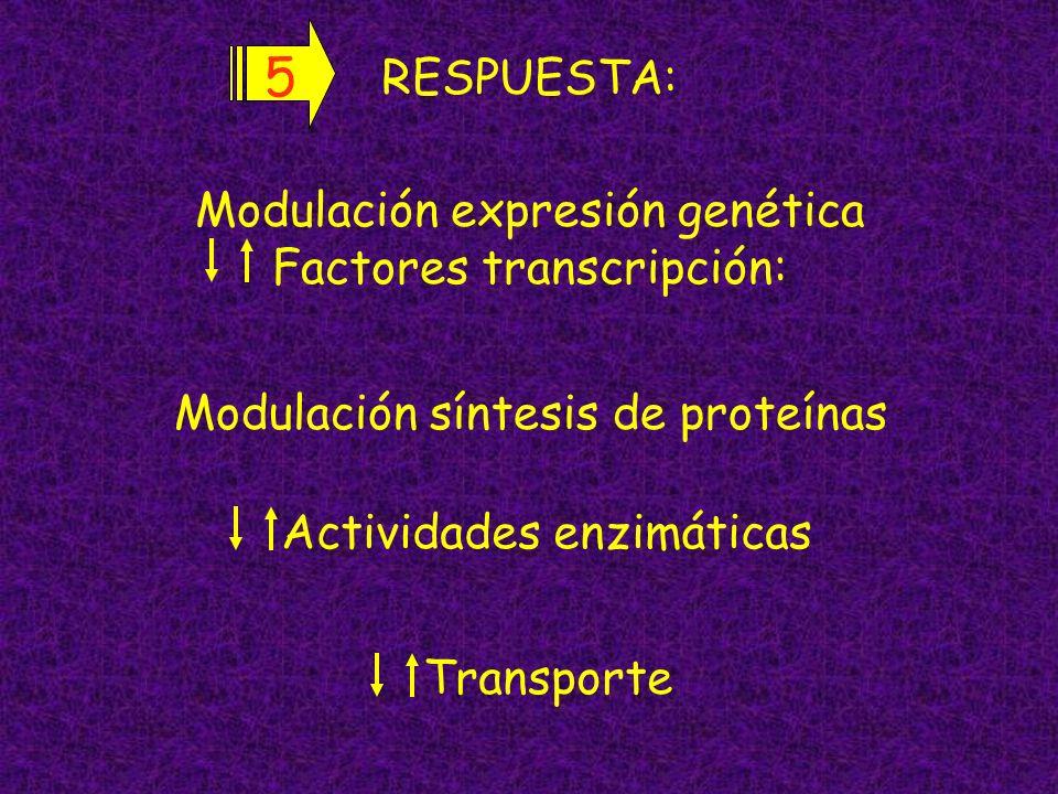 Modulación expresión genética Factores transcripción: Actividades enzimáticas Transporte Modulación síntesis de proteínas RESPUESTA: 5