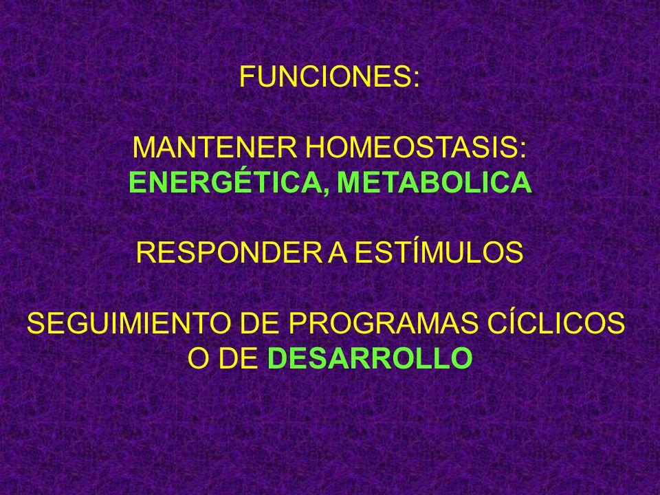 FUNCIONES: MANTENER HOMEOSTASIS: ENERGÉTICA, METABOLICA RESPONDER A ESTÍMULOS SEGUIMIENTO DE PROGRAMAS CÍCLICOS O DE DESARROLLO