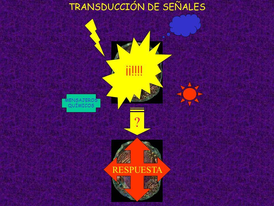TRANSDUCCIÓN DE SEÑALES MENSAJEROS QUÍMICOS ¡¡!!!! RESPUESTA ?