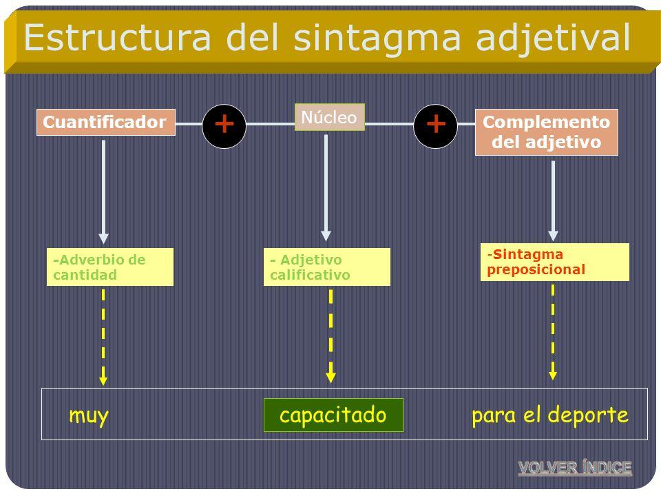 Núcleo Complemento del adjetivo -Adverbio de cantidad -Sintagma preposicional Cuantificador ++ capacitadomuypara el deporte Estructura del sintagma ad