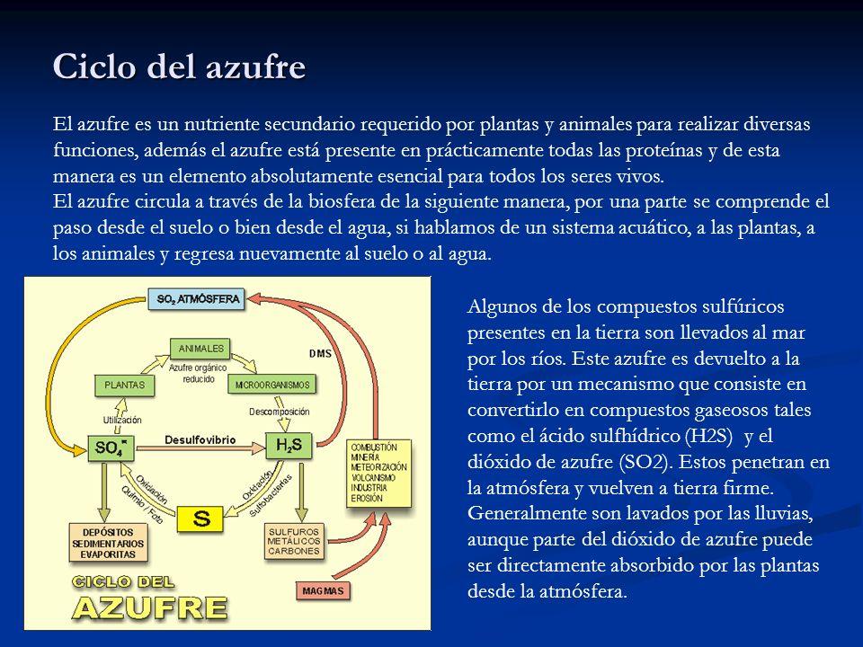 Ciclo del azufre El azufre es un nutriente secundario requerido por plantas y animales para realizar diversas funciones, además el azufre está present