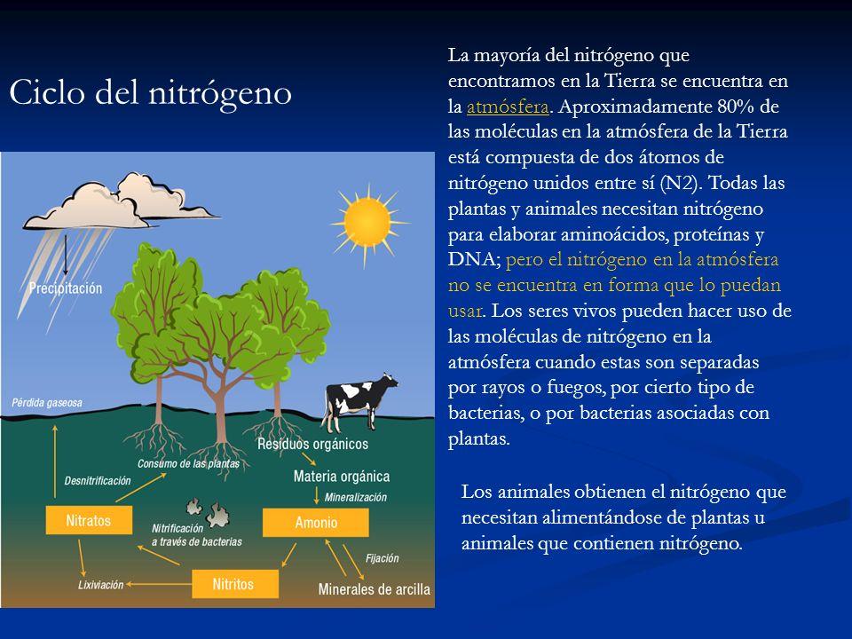 Ciclo del nitrógeno La mayoría del nitrógeno que encontramos en la Tierra se encuentra en la atmósfera. Aproximadamente 80% de las moléculas en la atm