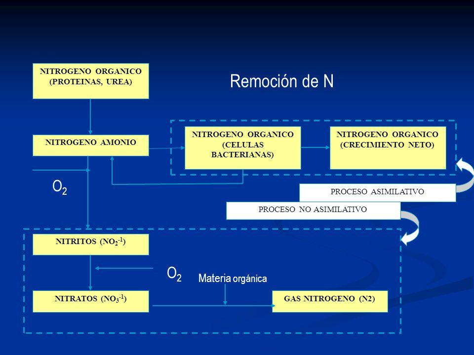 NITROGENO ORGANICO (PROTEINAS, UREA) NITROGENO AMONIO NITROGENO ORGANICO (CELULAS BACTERIANAS) NITROGENO ORGANICO (CRECIMIENTO NETO) NITRITOS (NO 2 -1