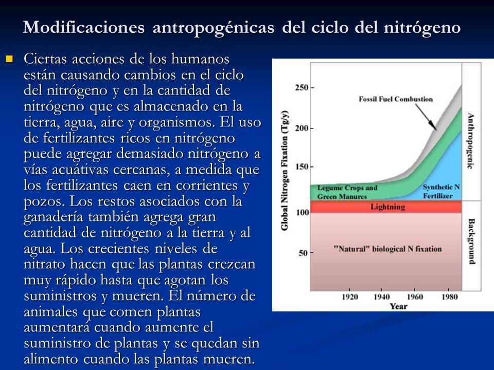 Modificaciones antropogénicas del ciclo del nitrógeno Ciertas acciones de los humanos están causando cambios en el ciclo del nitrógeno y en la cantida