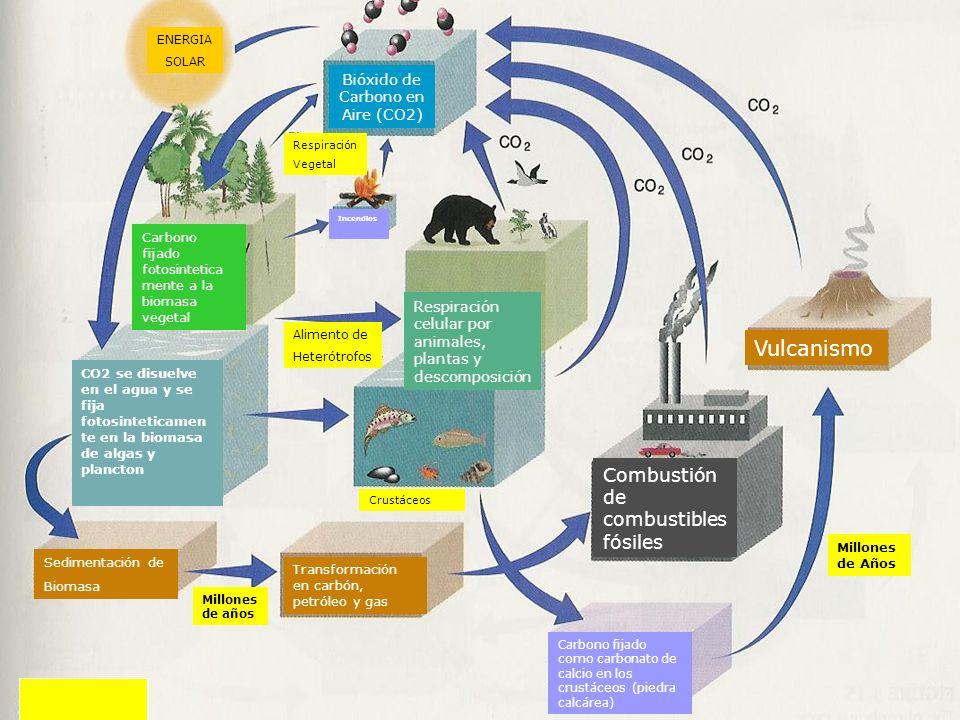 ENERGIA SOLAR Bióxido de Carbono en Aire (CO2) Respiración Vegetal Incendios Carbono fijado fotosintetica mente a la biomasa vegetal CO2 se disuelve e