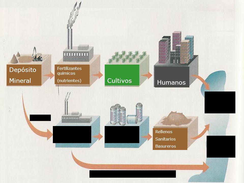 Depósito Mineral Fertilizantes químicos (nutrientes) Cultivos Humanos Descarga de efluentes sucios Rellenos Sanitarios Basureros Uso Humano Productos