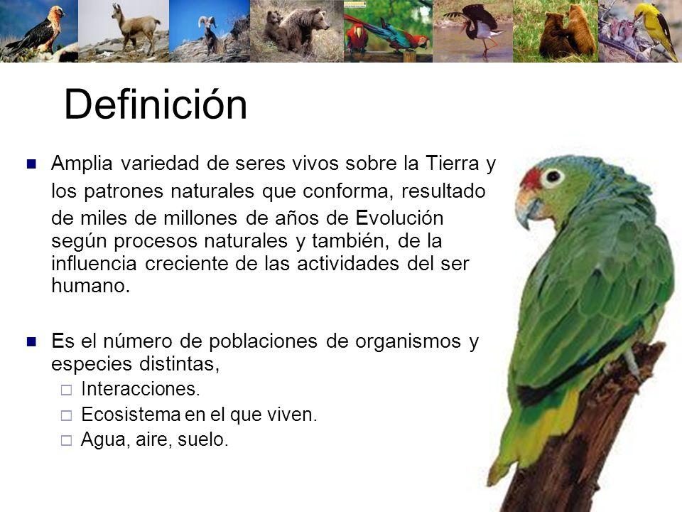 Definición Amplia variedad de seres vivos sobre la Tierra y los patrones naturales que conforma, resultado de miles de millones de años de Evolución s