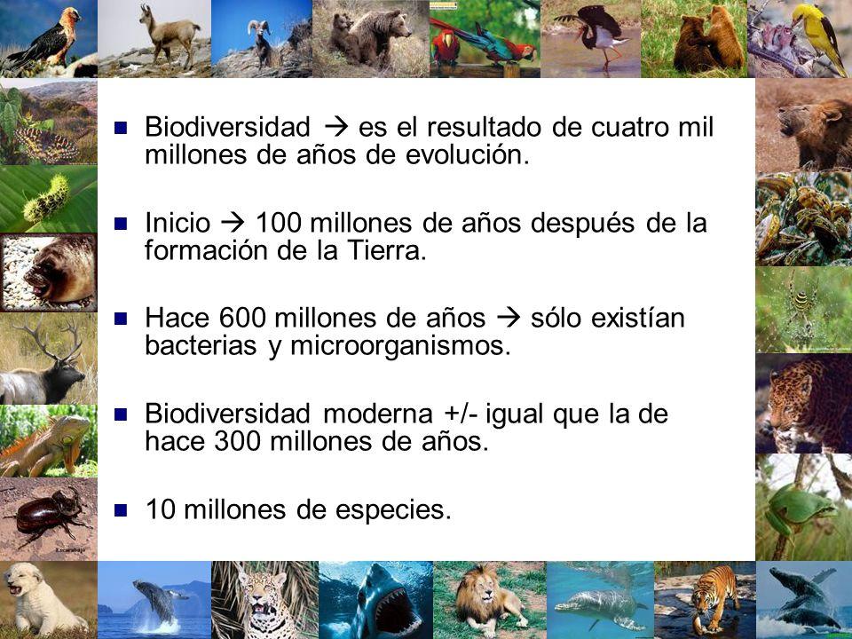 Biodiversidad es el resultado de cuatro mil millones de años de evolución. Inicio 100 millones de años después de la formación de la Tierra. Hace 600
