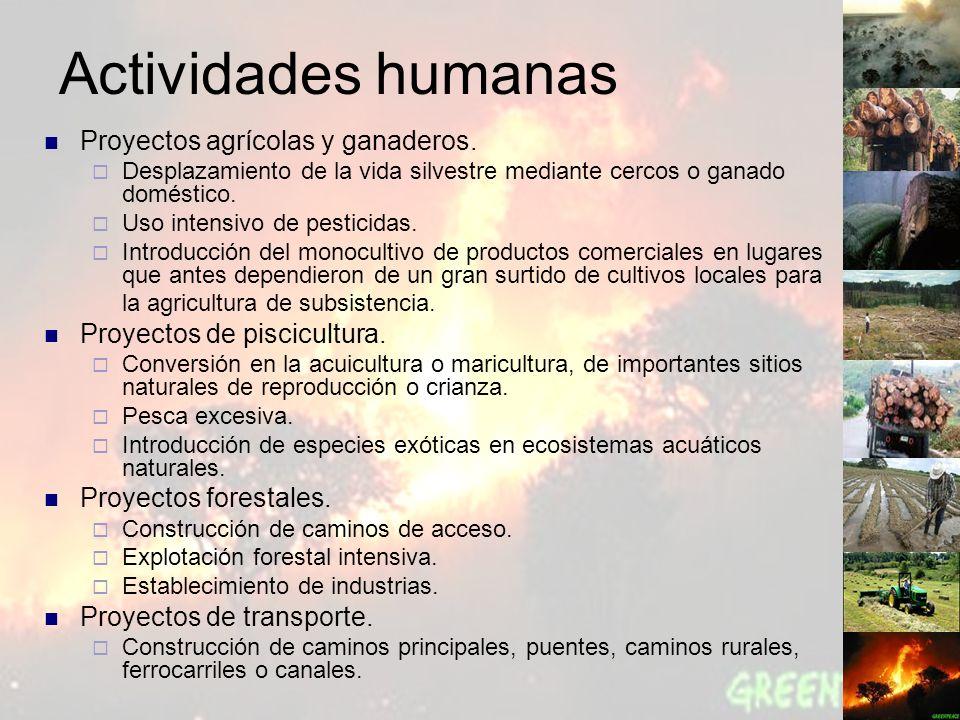 Actividades humanas Proyectos agrícolas y ganaderos. Desplazamiento de la vida silvestre mediante cercos o ganado doméstico. Uso intensivo de pesticid