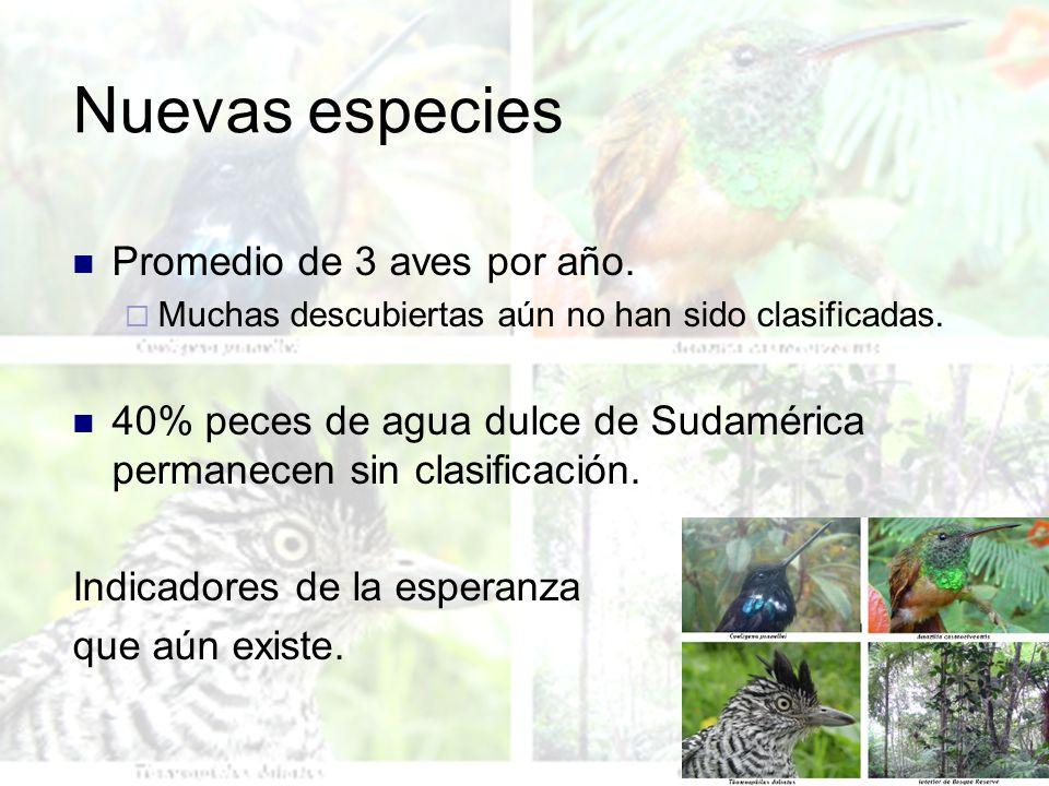 Nuevas especies Promedio de 3 aves por año. Muchas descubiertas aún no han sido clasificadas. 40% peces de agua dulce de Sudamérica permanecen sin cla