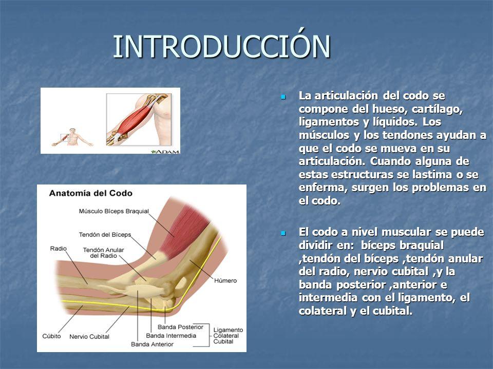INTRODUCCIÓN La articulación del codo se compone del hueso, cartílago, ligamentos y líquidos. Los músculos y los tendones ayudan a que el codo se muev