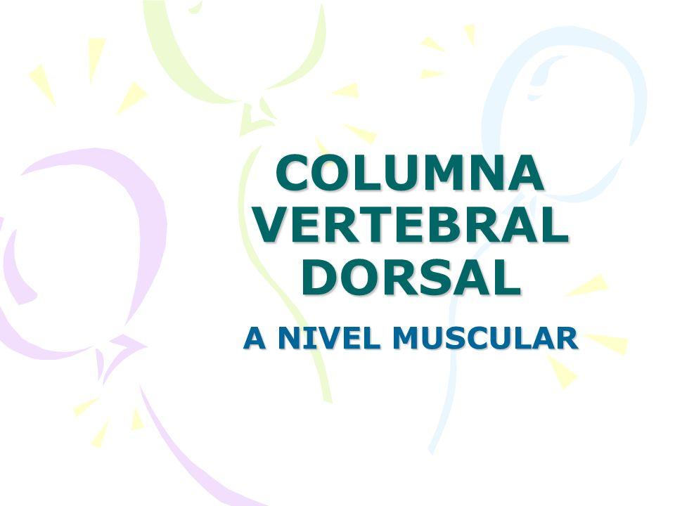 COLUMNA VERTEBRAL DORSAL A NIVEL MUSCULAR