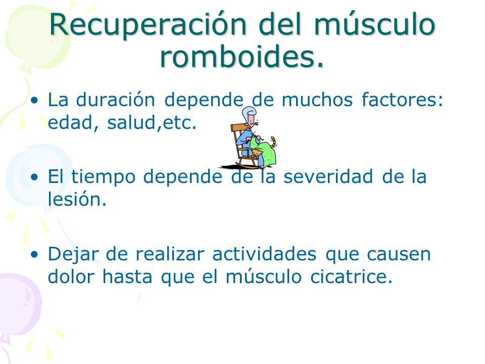 Recuperación del músculo romboides. La duración depende de muchos factores: edad, salud,etc. El tiempo depende de la severidad de la lesión. Dejar de