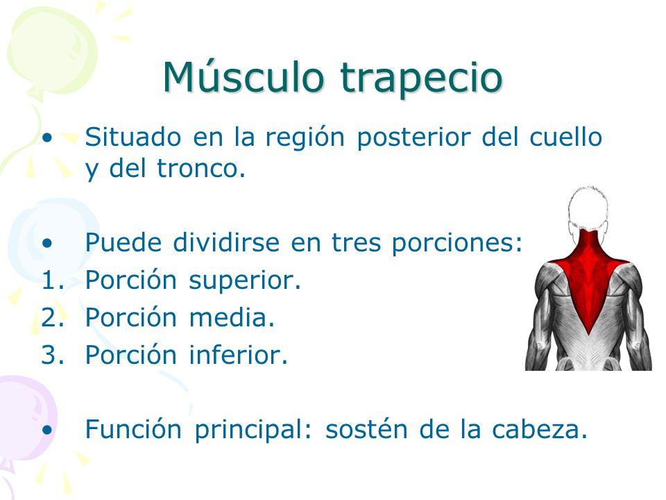 Músculo trapecio Situado en la región posterior del cuello y del tronco. Puede dividirse en tres porciones: 1.Porción superior. 2.Porción media. 3.Por