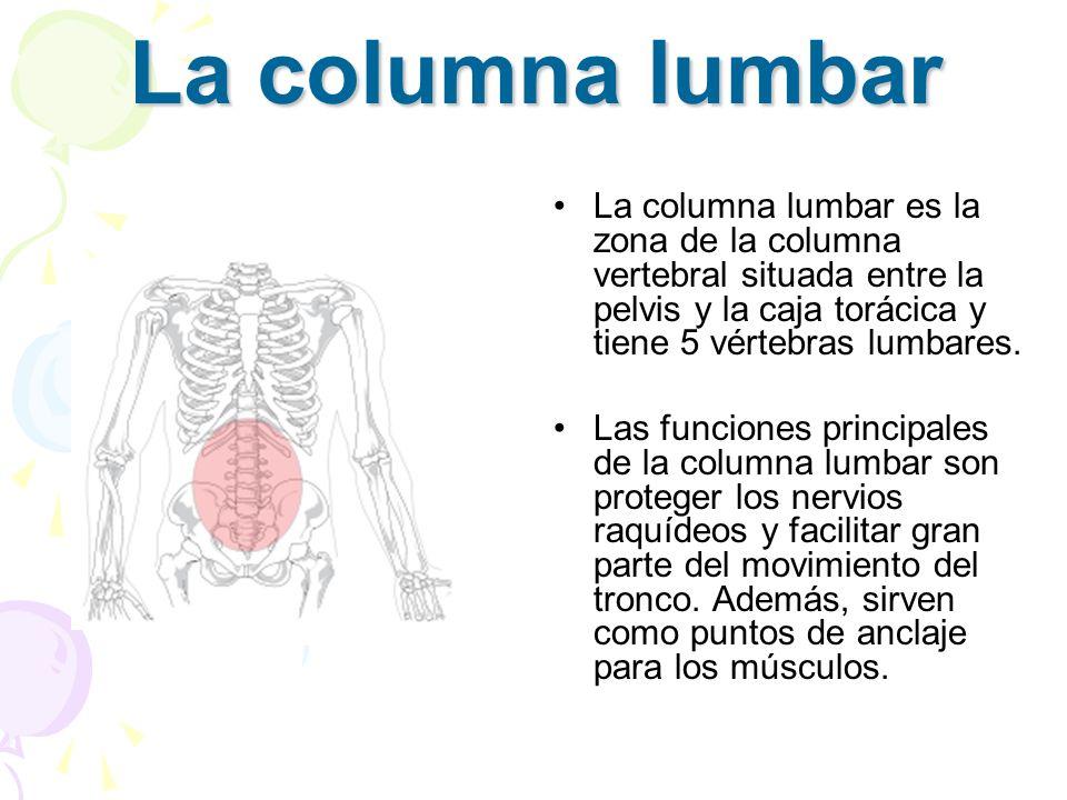 La columna lumbar La columna lumbar es la zona de la columna vertebral situada entre la pelvis y la caja torácica y tiene 5 vértebras lumbares. Las fu