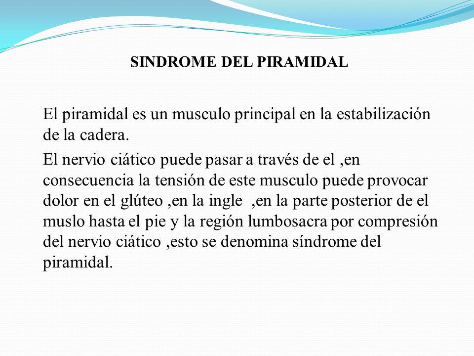 SINDROME DEL PIRAMIDAL El piramidal es un musculo principal en la estabilización de la cadera. El nervio ciático puede pasar a través de el,en consecu