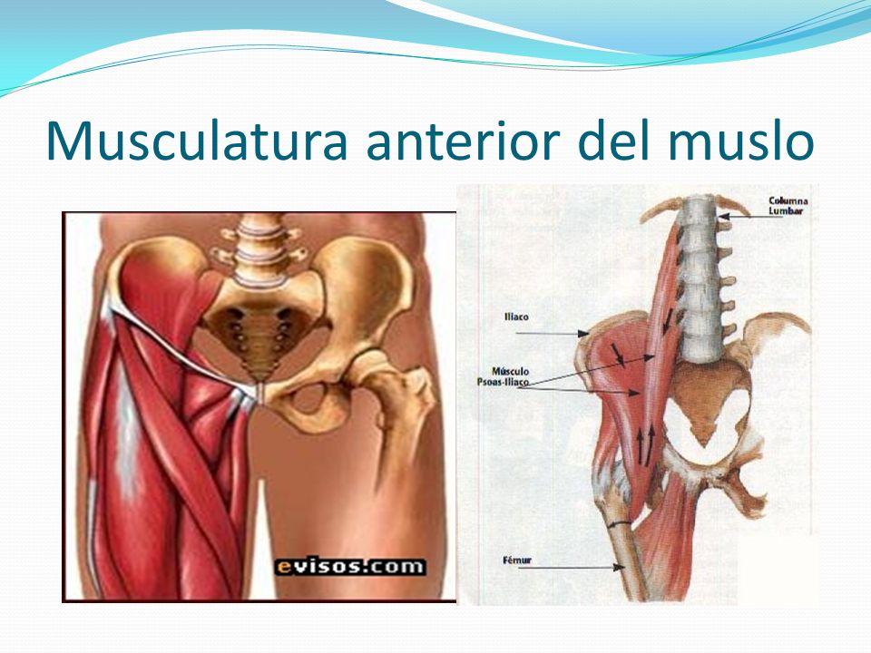 LESIONES MUSCULARES LESIONES DEL MUSLO Generalmente son tanto de la musculatura anterior, cuadriceps, como posterior, isquiotibiales, y concentran la mayor parte de las lesiones musculares del tren inferior.