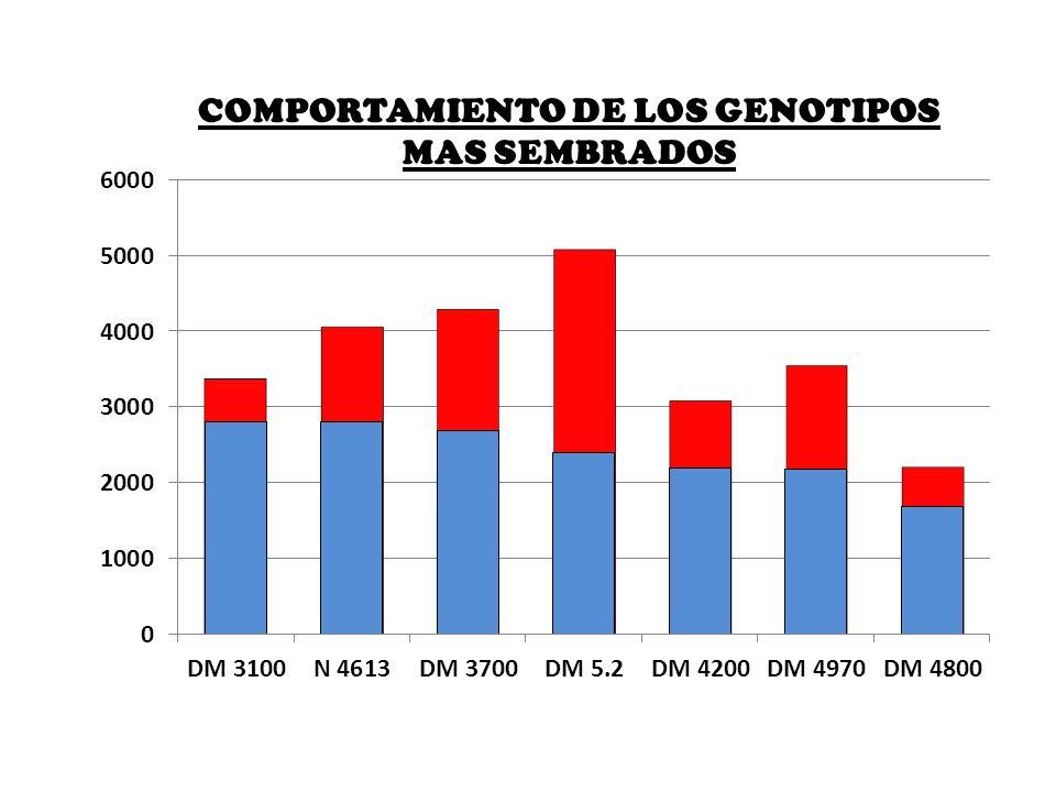 COMPORTAMIENTO DE LOS GENOTIPOS MAS SEMBRADOS