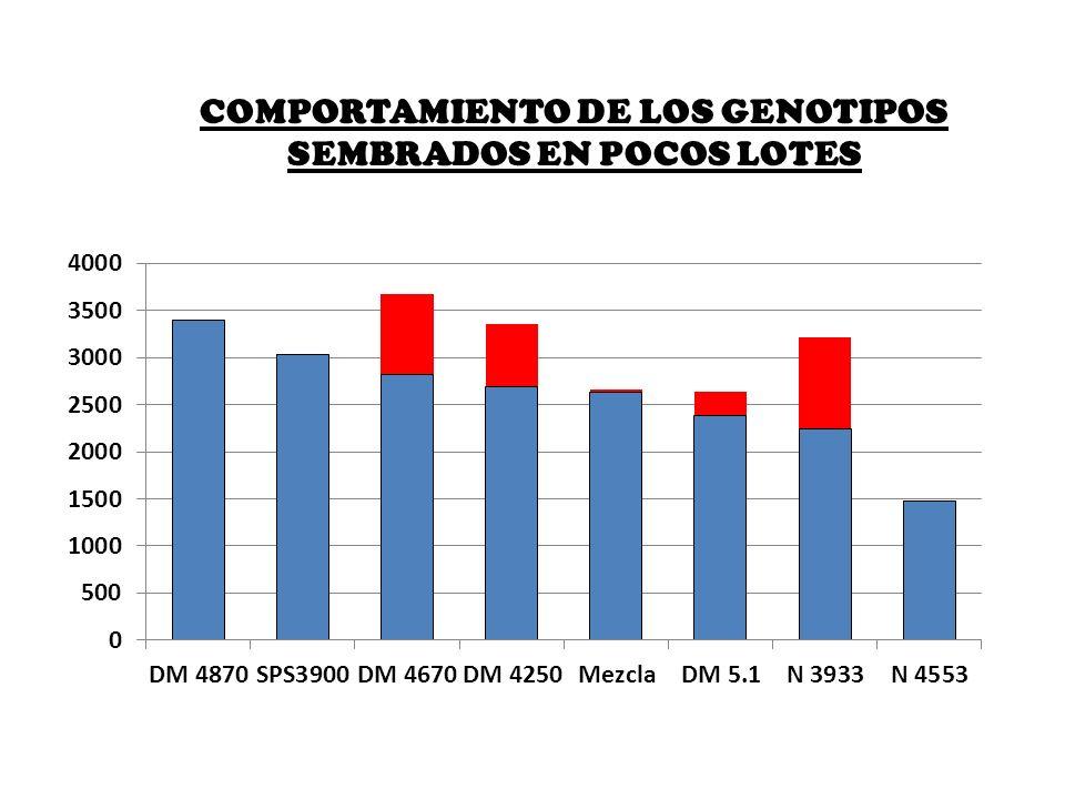COMPORTAMIENTO DE LOS GENOTIPOS SEMBRADOS EN POCOS LOTES