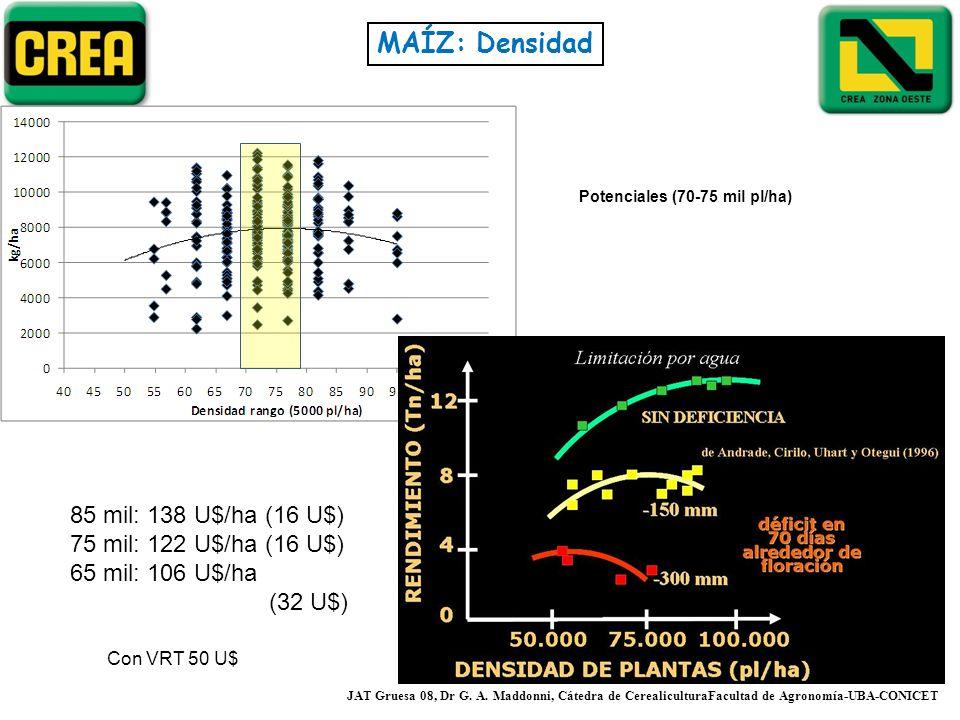 MAÍZ: Densidad JAT Gruesa 08, Dr G. A. Maddonni, Cátedra de CerealiculturaFacultad de Agronomía-UBA-CONICET Potenciales (70-75 mil pl/ha) 85 mil: 138