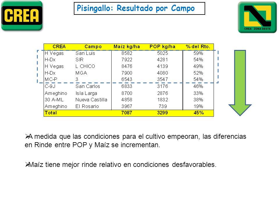 Pisingallo: Resultado por Campo A medida que las condiciones para el cultivo empeoran, las diferencias en Rinde entre POP y Maíz se incrementan. Maíz