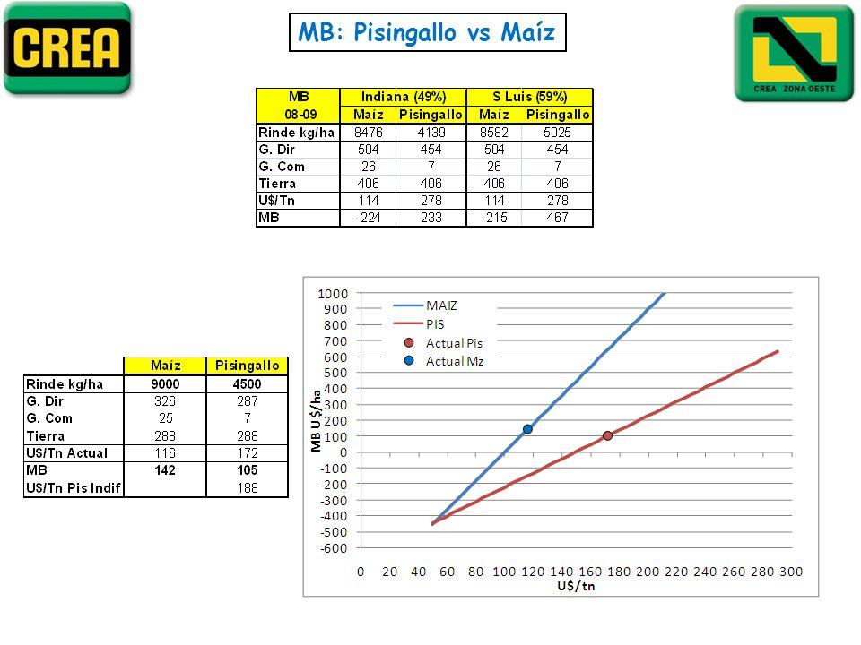 MB: Pisingallo vs Maíz