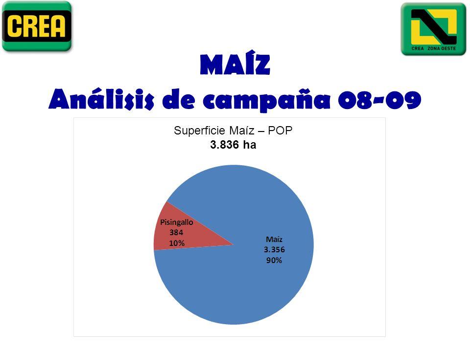 MAÍZ Análisis de campaña 08-09 Superficie Maíz – POP 3.836 ha