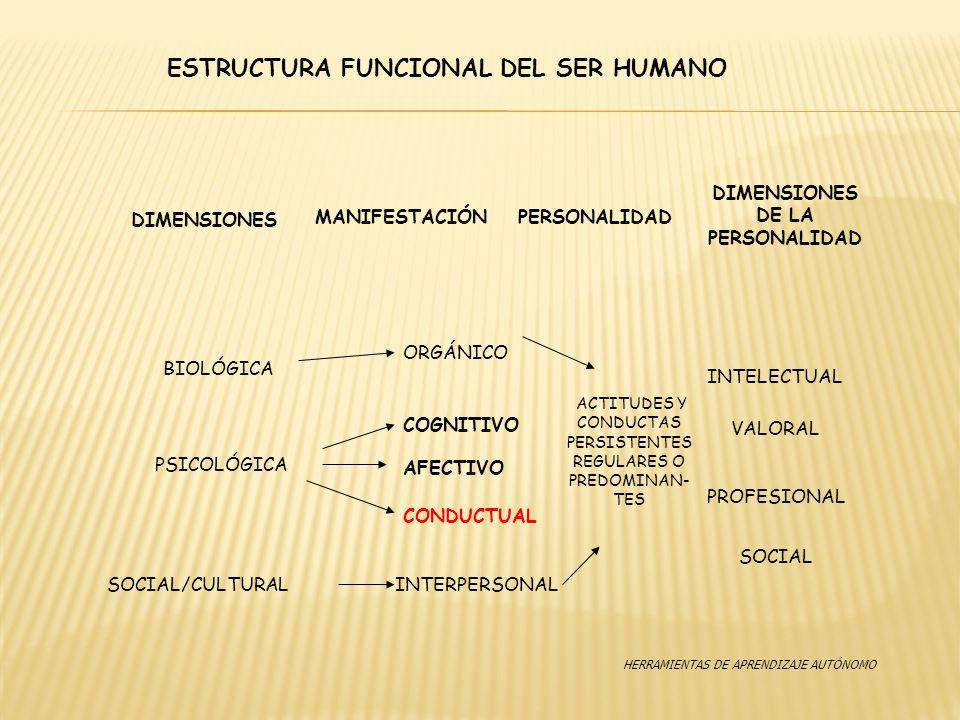 ESTRUCTURA FUNCIONAL DEL SER HUMANO SOCIAL/CULTURAL DIMENSIONES MANIFESTACIÓN DIMENSIONES DE LA PERSONALIDAD BIOLÓGICA PSICOLÓGICA ORGÁNICO COGNITIVO