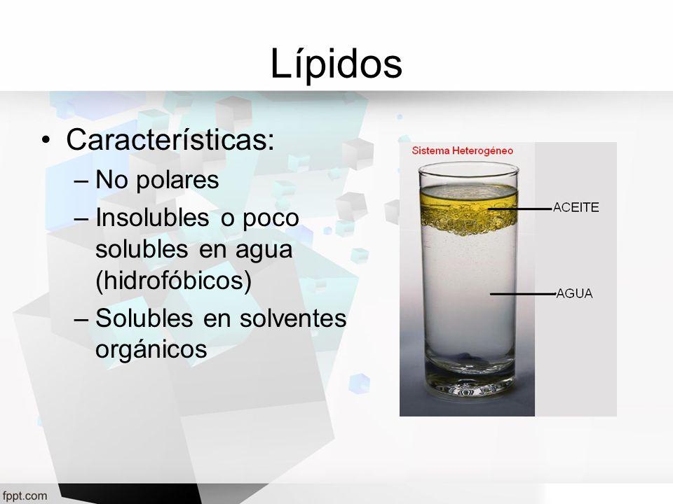 Lípidos Características: –No polares –Insolubles o poco solubles en agua (hidrofóbicos) –Solubles en solventes orgánicos