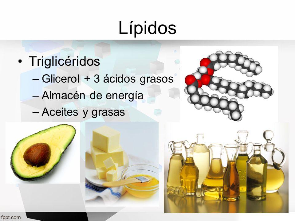 Lípidos Triglicéridos –Glicerol + 3 ácidos grasos –Almacén de energía –Aceites y grasas