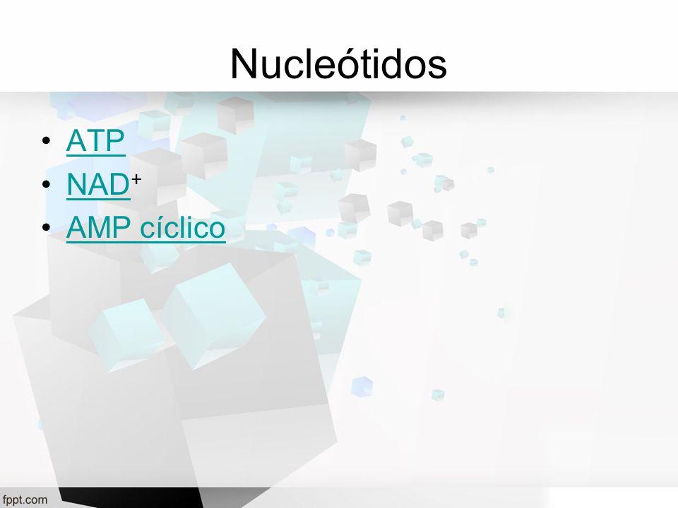 Nucleótidos ATP NAD +NAD AMP cíclico