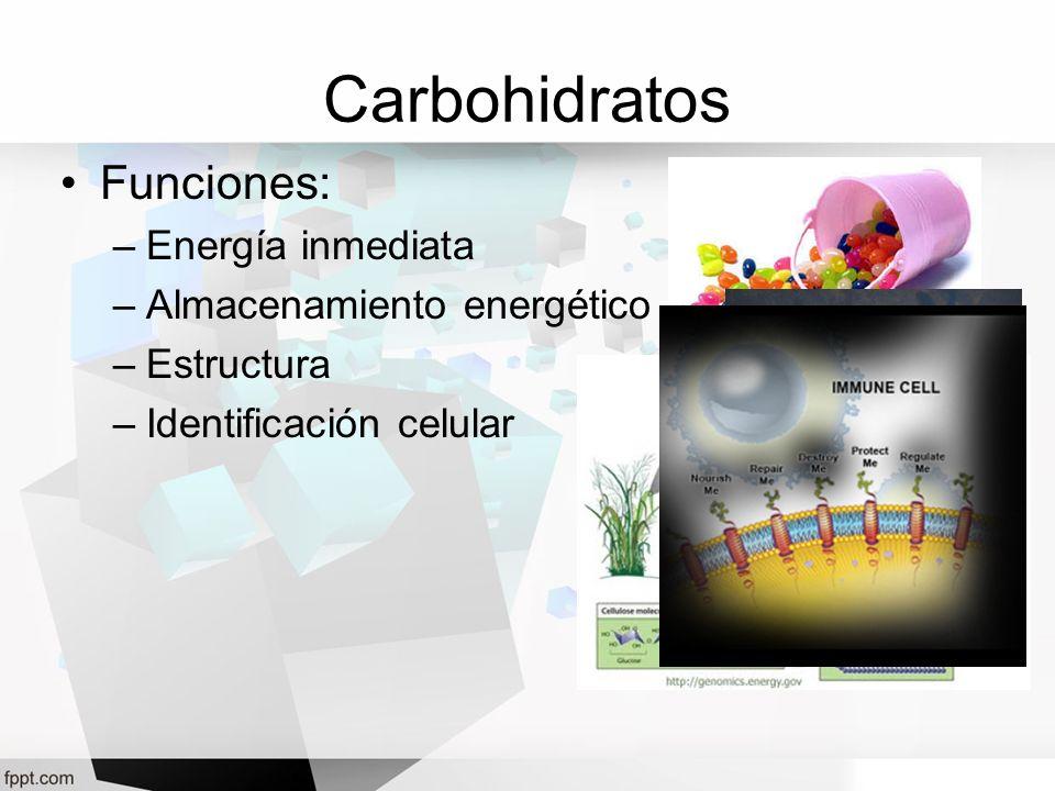Carbohidratos Funciones: –Energía inmediata –Almacenamiento energético –Estructura –Identificación celular