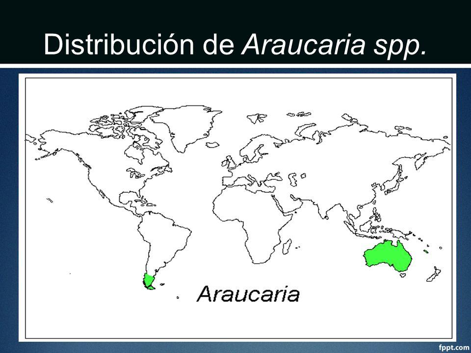 Distribución de Araucaria spp.
