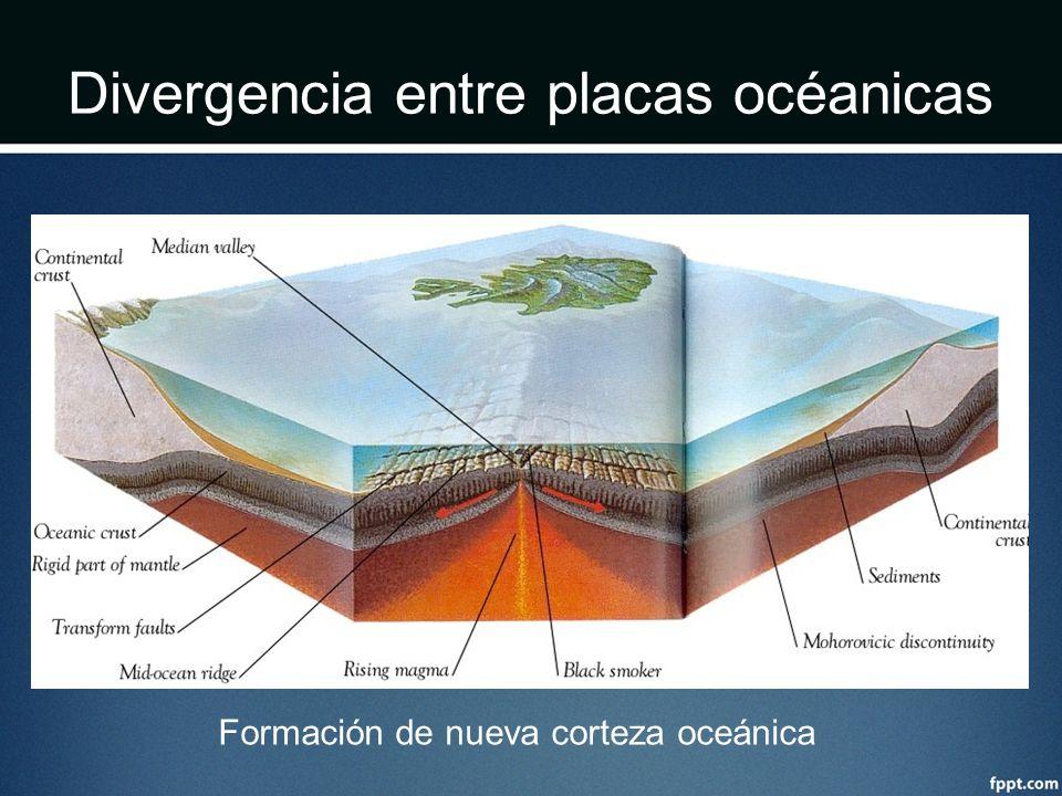 Divergencia entre placas océanicas Formación de nueva corteza oceánica