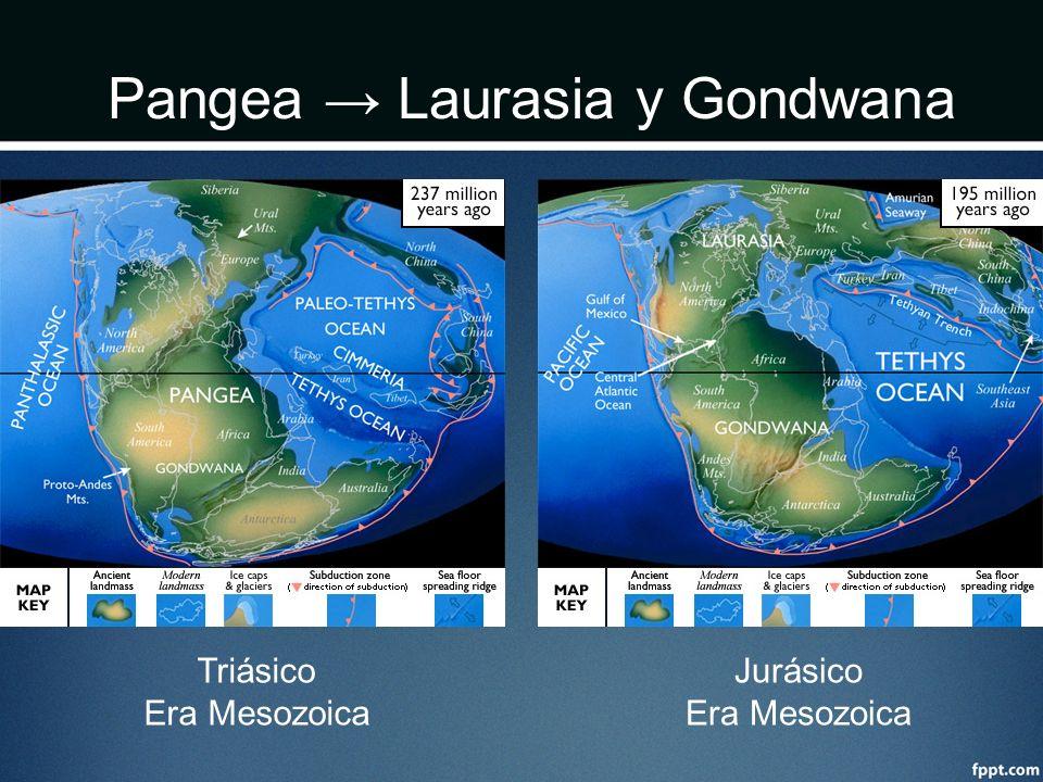 Pangea Laurasia y Gondwana Triásico Era Mesozoica Jurásico Era Mesozoica
