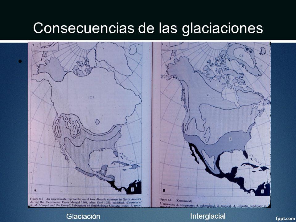 Consecuencias de las glaciaciones Clima Glaciación Interglacial