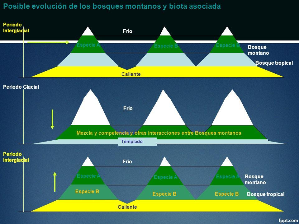 Período Interglacial Frío Bosque montano Caliente Bosque tropical Especie A Período Glacial Frío Templado Mezcla y competencia y otras interacciones e