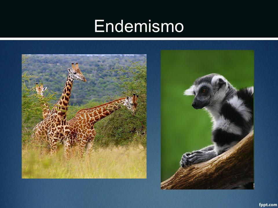 Endemismo