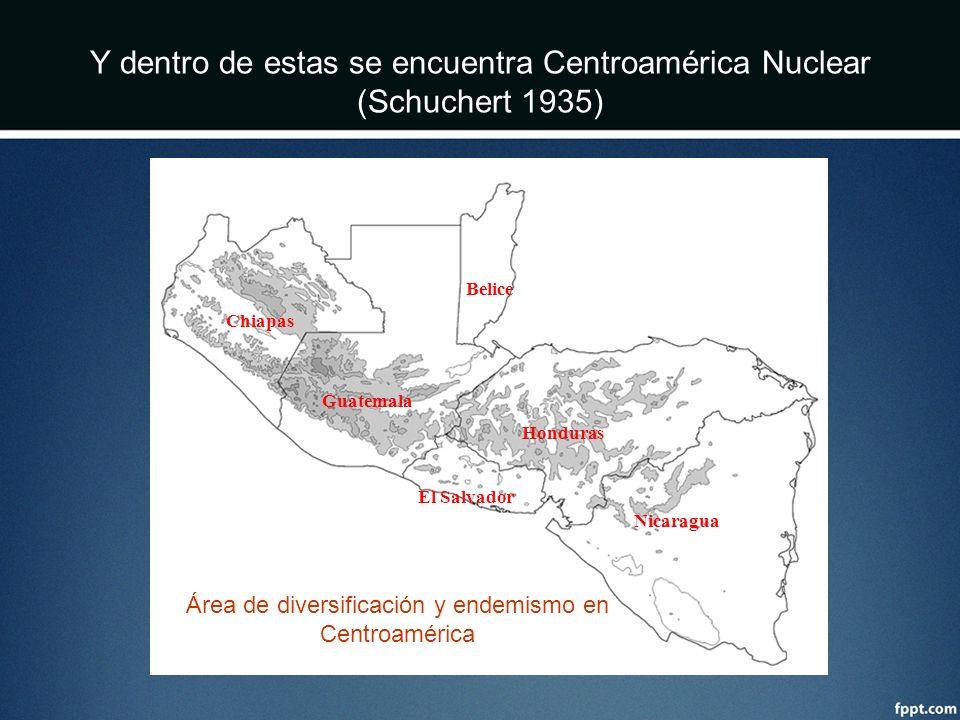 Chiapas Guatemala Honduras Nicaragua El Salvador Belice Y dentro de estas se encuentra Centroamérica Nuclear (Schuchert 1935) Área de diversificación