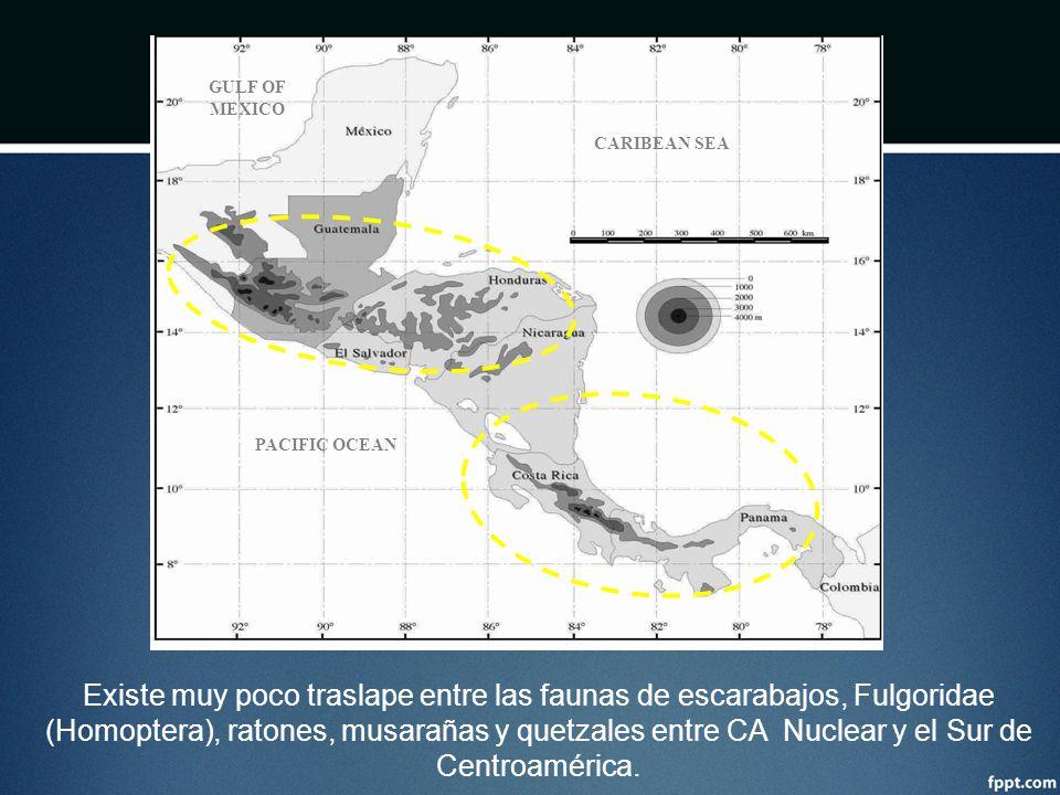 GULF OF MEXICO CARIBEAN SEA PACIFIC OCEAN Existe muy poco traslape entre las faunas de escarabajos, Fulgoridae (Homoptera), ratones, musarañas y quetz