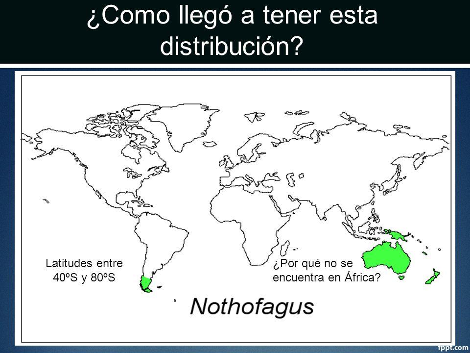 ¿Como llegó a tener esta distribución? Latitudes entre 40ºS y 80ºS ¿Por qué no se encuentra en África?