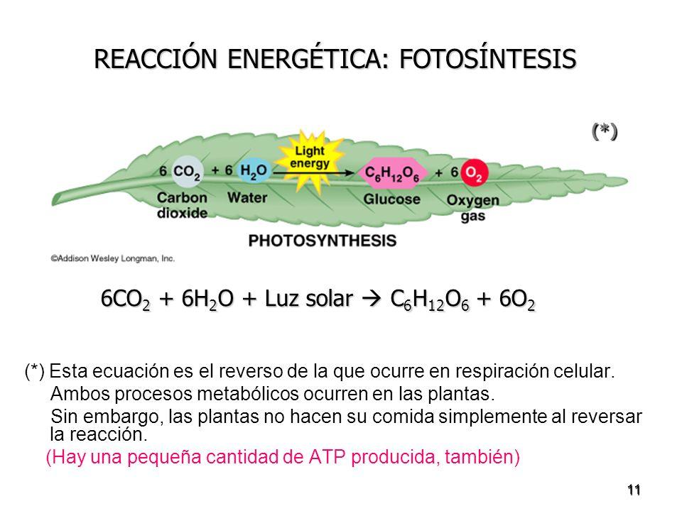 11 (*) Esta ecuación es el reverso de la que ocurre en respiración celular. Ambos procesos metabólicos ocurren en las plantas. Sin embargo, las planta