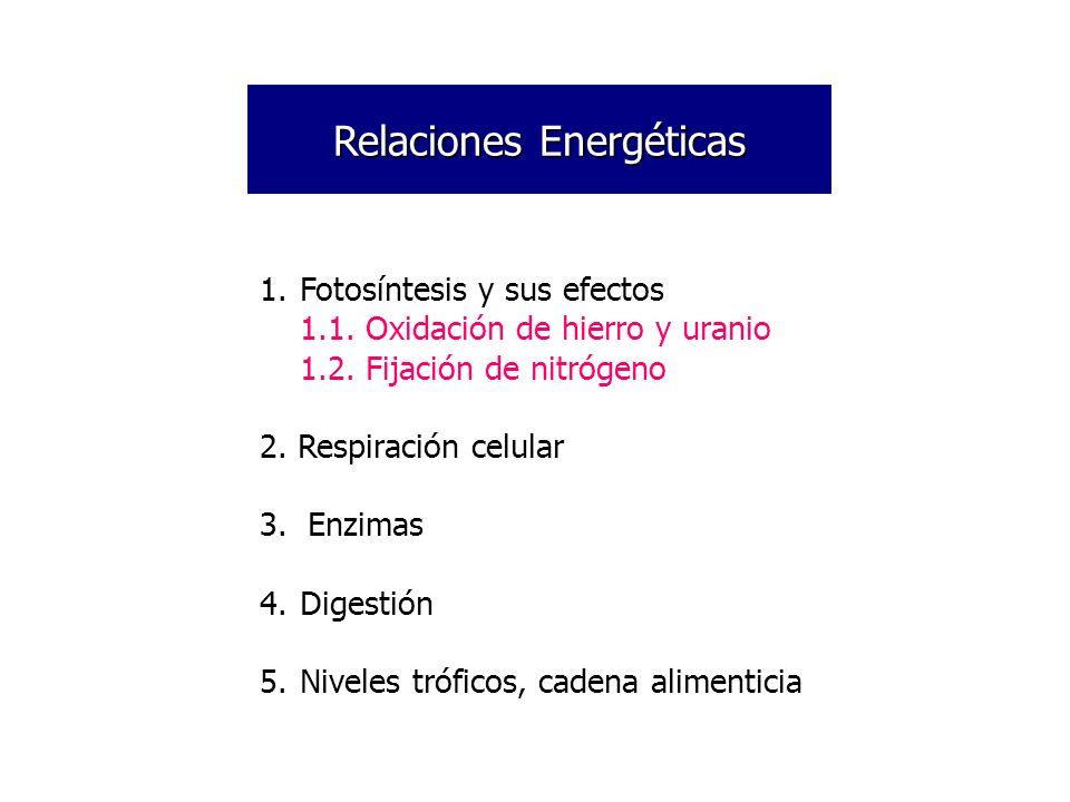 Relaciones Energéticas 1.Fotosíntesis y sus efectos 1.1. Oxidación de hierro y uranio 1.2. Fijación de nitrógeno 2. Respiración celular 3. Enzimas 4.D