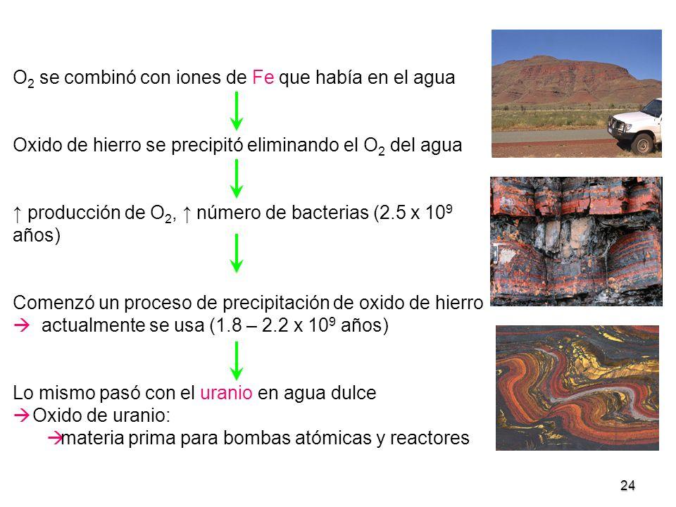 24 O 2 se combinó con iones de Fe que había en el agua Oxido de hierro se precipitó eliminando el O 2 del agua producción de O 2, número de bacterias
